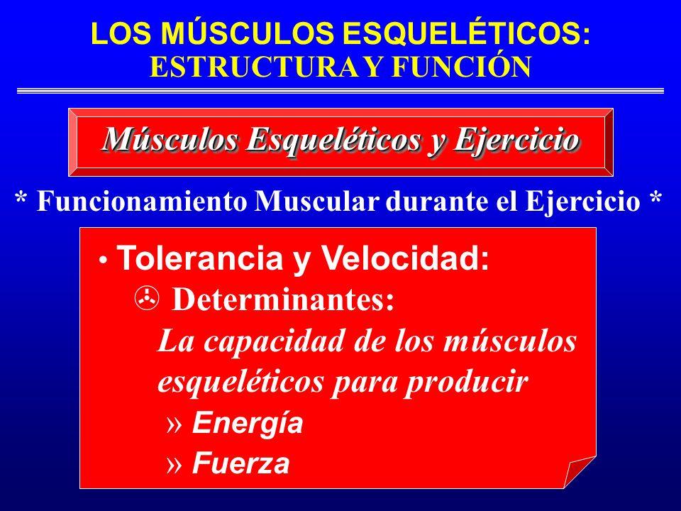 LOS MÚSCULOS ESQUELÉTICOS: ESTRUCTURA Y FUNCIÓN * Funcionamiento Muscular durante el Ejercicio * Músculos Esqueléticos y Ejercicio Tolerancia y Veloci