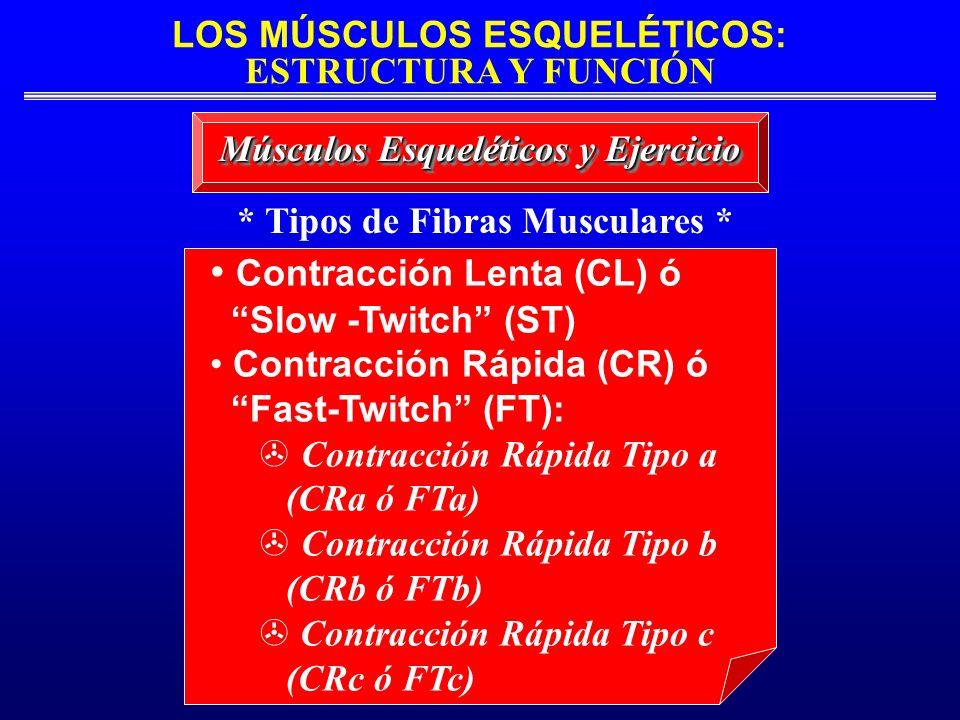LOS MÚSCULOS ESQUELÉTICOS: ESTRUCTURA Y FUNCIÓN * Tipos de Fibras Musculares * Músculos Esqueléticos y Ejercicio Contracción Lenta (CL) ó Slow -Twitch