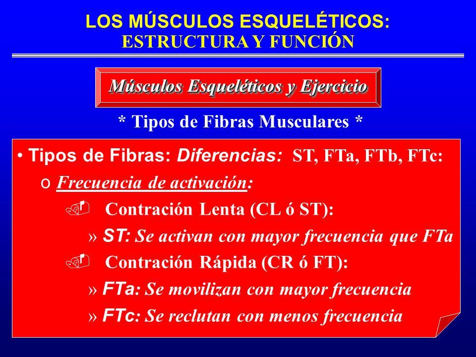 LOS MÚSCULOS ESQUELÉTICOS: ESTRUCTURA Y FUNCIÓN * Tipos de Fibras Musculares * Músculos Esqueléticos y Ejercicio Tipos de Fibras: Diferencias: ST, FTa