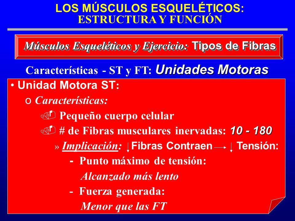 LOS MÚSCULOS ESQUELÉTICOS: ESTRUCTURA Y FUNCIÓN Unidades Motoras Características - ST y FT: Unidades Motoras Músculos Esqueléticos y Ejercicio: Tipos