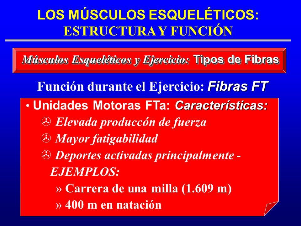 Características: Unidades Motoras FTa: Características: Elevada produccón de fuerza > Mayor fatigabilidad > Deportes activadas principalmente - EJEMPL