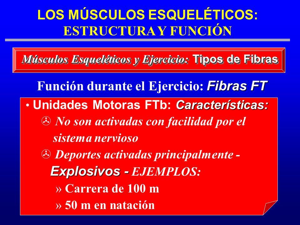 Características: Unidades Motoras FTb: Características: No son activadas con facilidad por el sistema nervioso > Deportes activadas principalmente - E