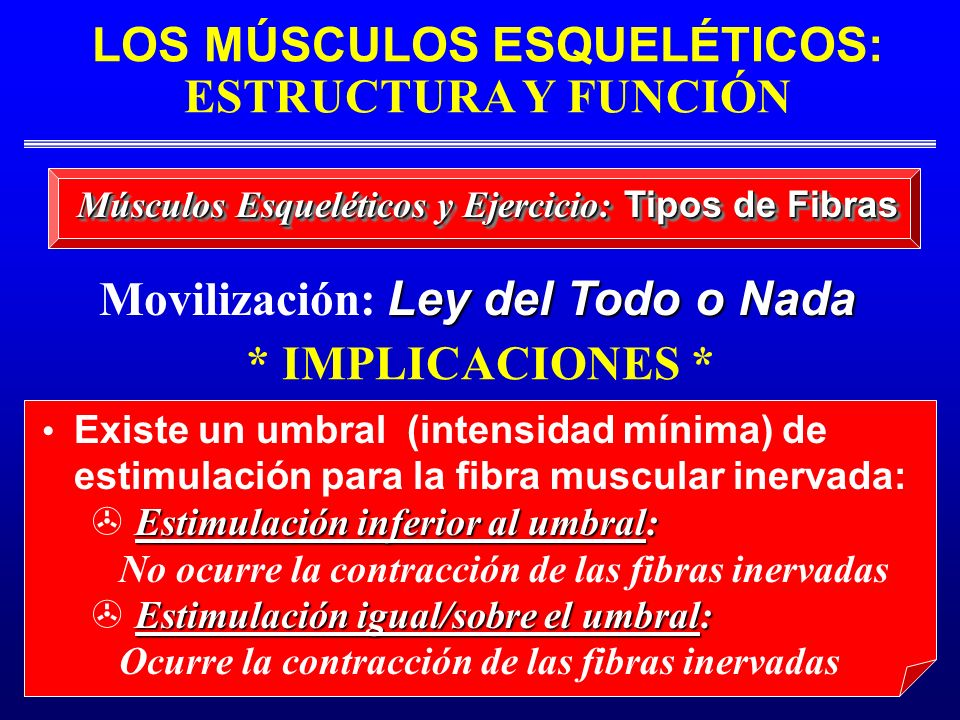 LOS MÚSCULOS ESQUELÉTICOS: ESTRUCTURA Y FUNCIÓN Músculos Esqueléticos y Ejercicio: Tipos de Fibras Existe un umbral (intensidad mínima) de estimulació