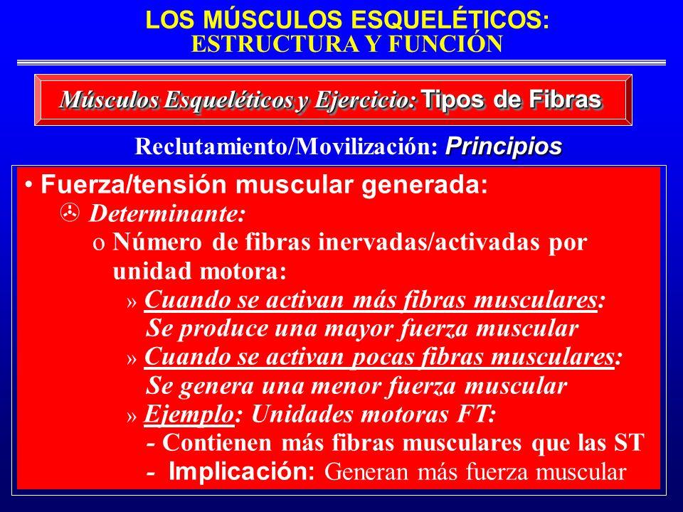 LOS MÚSCULOS ESQUELÉTICOS: ESTRUCTURA Y FUNCIÓN Músculos Esqueléticos y Ejercicio: Tipos de Fibras Principios Reclutamiento/Movilización: Principios F