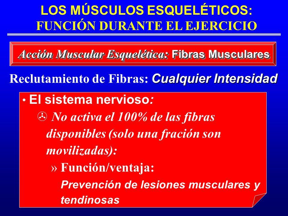 LOS MÚSCULOS ESQUELÉTICOS: FUNCIÓN DURANTE EL EJERCICIO Cualquier Intensidad Reclutamiento de Fibras: Cualquier Intensidad El sistema nervioso: No act