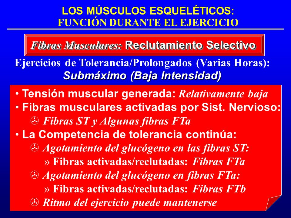 LOS MÚSCULOS ESQUELÉTICOS: FUNCIÓN DURANTE EL EJERCICIO Fibras Musculares: Reclutamiento Selectivo Ejercicios de Tolerancia/Prolongados (Varias Horas)