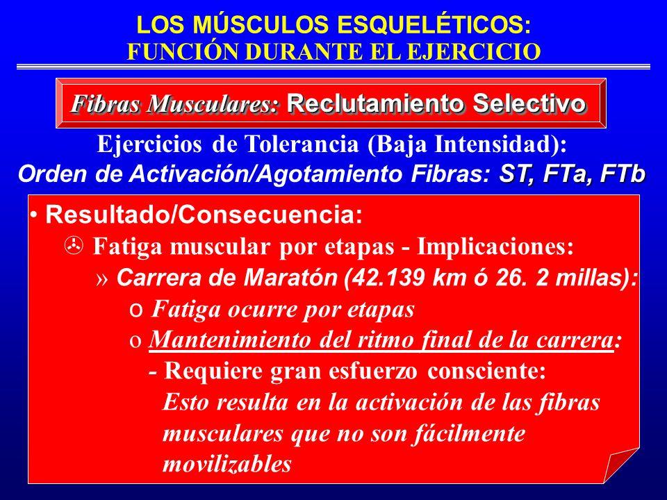 LOS MÚSCULOS ESQUELÉTICOS: FUNCIÓN DURANTE EL EJERCICIO Fibras Musculares: Reclutamiento Selectivo Ejercicios de Tolerancia (Baja Intensidad): ST, FTa