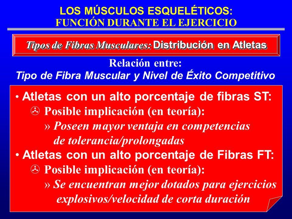 LOS MÚSCULOS ESQUELÉTICOS: FUNCIÓN DURANTE EL EJERCICIO Tipos de Fibras Musculares: Distribución en Atletas Relación entre: Tipo de Fibra Muscular y N