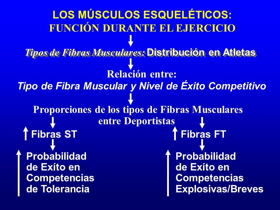 LOS MÚSCULOS ESQUELÉTICOS: FUNCIÓN DURANTE EL EJERCICIO Fibras ST Proporciones de los tipos de Fibras Musculares entre Deportistas Tipos de Fibras Mus