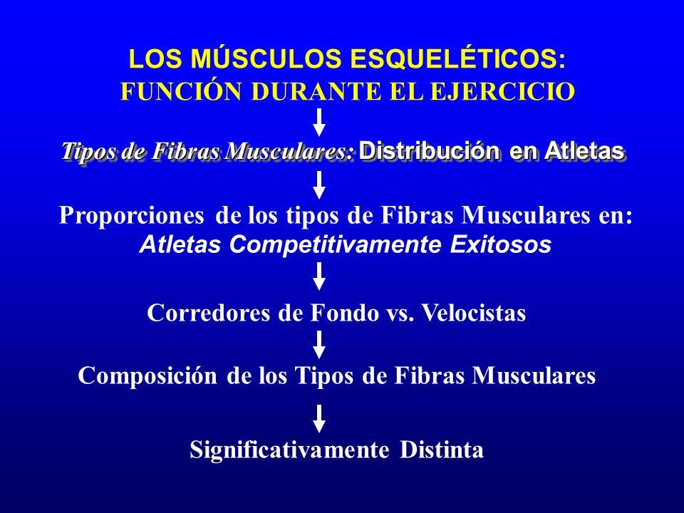 LOS MÚSCULOS ESQUELÉTICOS: FUNCIÓN DURANTE EL EJERCICIO Composición de los Tipos de Fibras Musculares Tipos de Fibras Musculares: Distribución en Atle