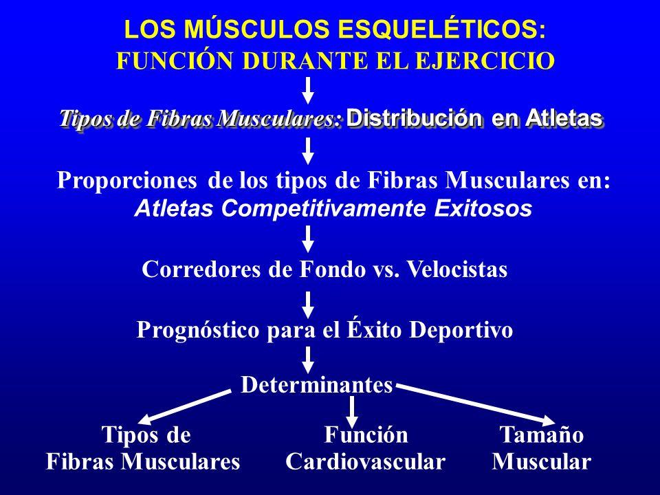 LOS MÚSCULOS ESQUELÉTICOS: FUNCIÓN DURANTE EL EJERCICIO Prognóstico para el Éxito Deportivo Tipos de Fibras Musculares: Distribución en Atletas Propor