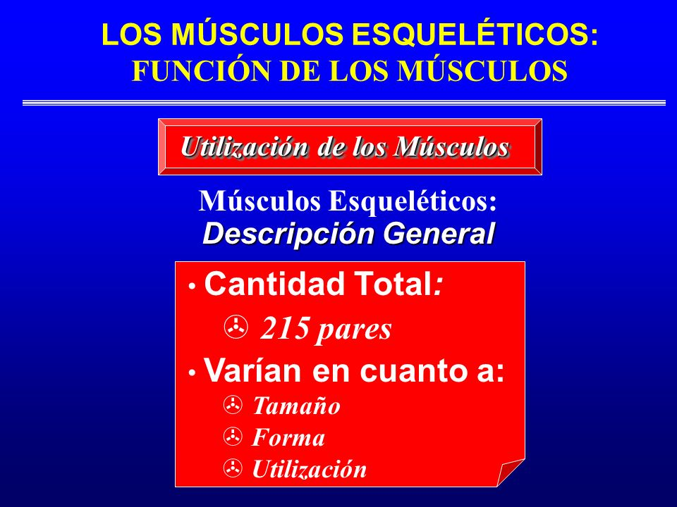 LOS MÚSCULOS ESQUELÉTICOS: FUNCIÓN DE LOS MÚSCULOS Músculos Esqueléticos: Descripción General Cantidad Total: 215 pares Varían en cuanto a: Tamaño > F