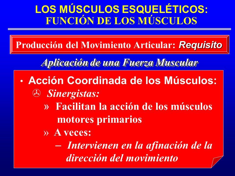 LOS MÚSCULOS ESQUELÉTICOS: FUNCIÓN DE LOS MÚSCULOS Aplicación de una Fuerza Muscular Requisito Producción del Movimiento Articular: Requisito Acción C