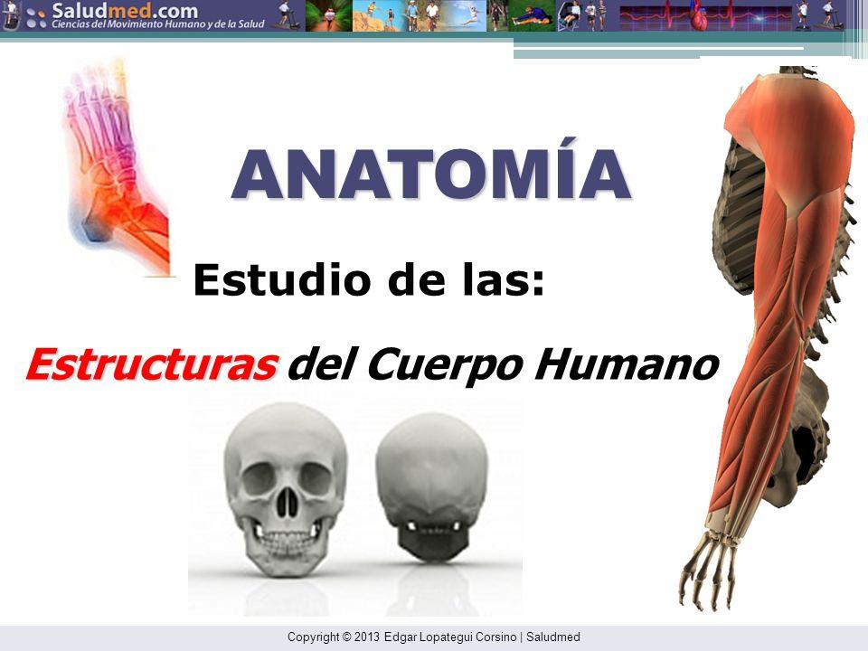 Copyright © 2013 Edgar Lopategui Corsino | Saludmed CONTENIDO DE LA PRESENTACIÓN Anatomía Cinesiología Importancia de la anatomía y cinesiología Objet
