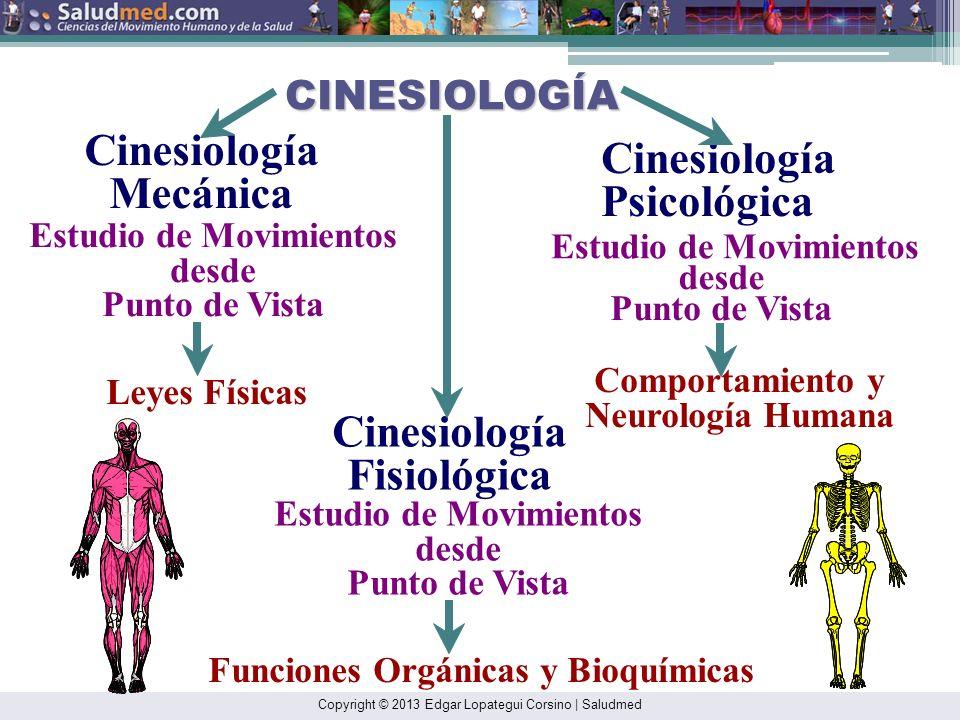 Copyright © 2013 Edgar Lopategui Corsino | Saludmed Cinesiología Estructural (Anatomía Aplicada) Mecánica (Biomecánica) Análisis Oseo-Muscular y Artic