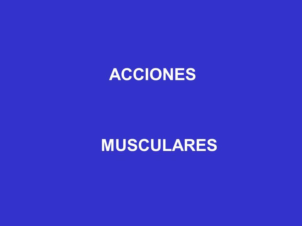 ACCIONES MUSCULARES