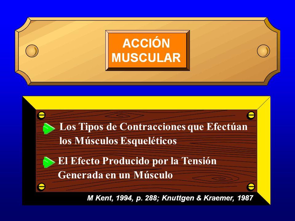 Los Tipos de Contracciones que Efectúan los Músculos Esqueléticos El Efecto Producido por la Tensión Generada en un Músculo M Kent, 1994, p. 288; Knut