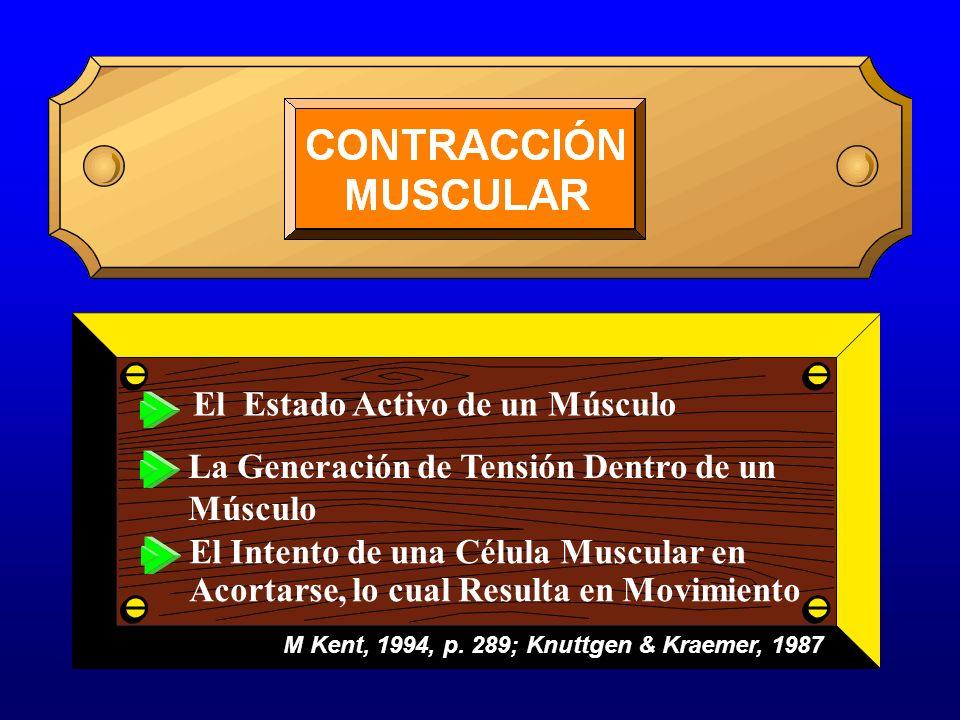 El Estado Activo de un Músculo La Generación de Tensión Dentro de un Músculo M Kent, 1994, p. 289; Knuttgen & Kraemer, 1987 El Intento de una Célula M