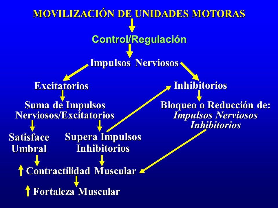 MOVILIZACIÓN DE UNIDADES MOTORAS Control/Regulación Impulsos Nerviosos Excitatorios Suma de Impulsos Nerviosos/Excitatorios Inhibitorios Satisface Umb