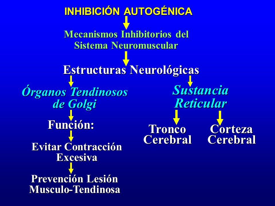 Mecanismos Inhibitorios del Sistema Neuromuscular Estructuras Neurológicas Órganos Tendinosos de Golgi INHIBICIÓN AUTOGÉNICA SustanciaReticular Funció