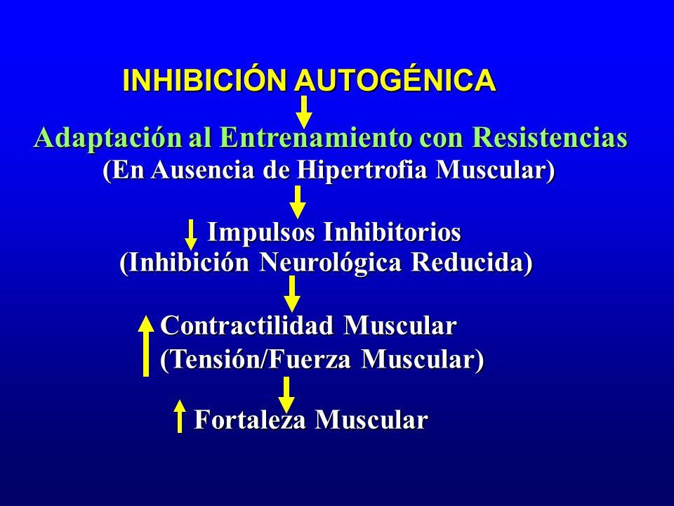 Adaptación al Entrenamiento con Resistencias INHIBICIÓN AUTOGÉNICA (En Ausencia de Hipertrofia Muscular) Impulsos Inhibitorios (Inhibición Neurológica