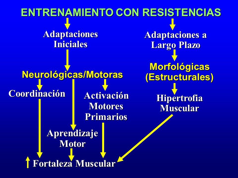 ENTRENAMIENTO CON RESISTENCIAS Neurológicas/Motoras Coordinación Adaptaciones Iniciales AprendizajeMotor ActivaciónMotoresPrimarios Fortaleza Muscular