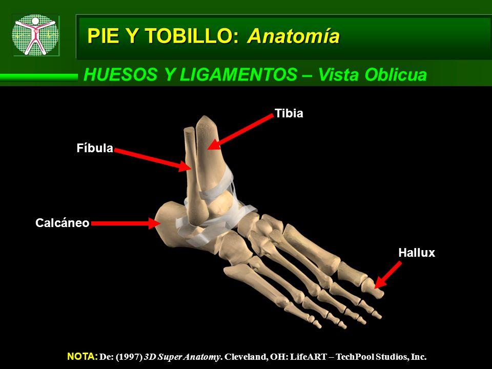 PIE Y TOBILLO: Anatomía HUESOS Y LIGAMENTOS – Vista Oblicua NOTA: De: (1997) 3D Super Anatomy. Cleveland, OH: LifeART – TechPool Studios, Inc. Calcáne