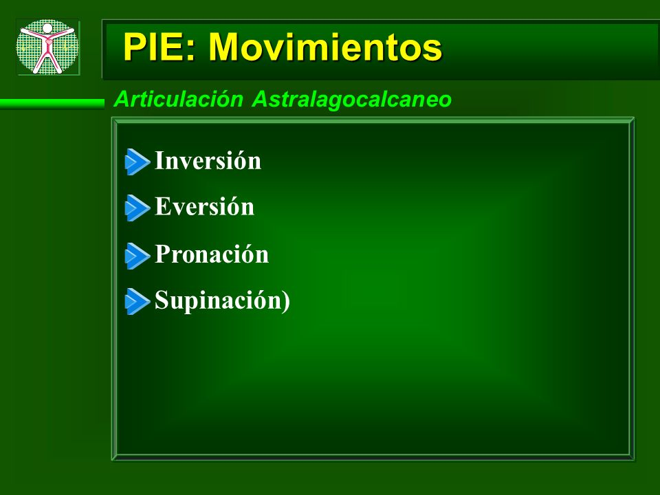 PIE: Movimientos Articulación Astralagocalcaneo Inversión Eversión Pronación Supinación)