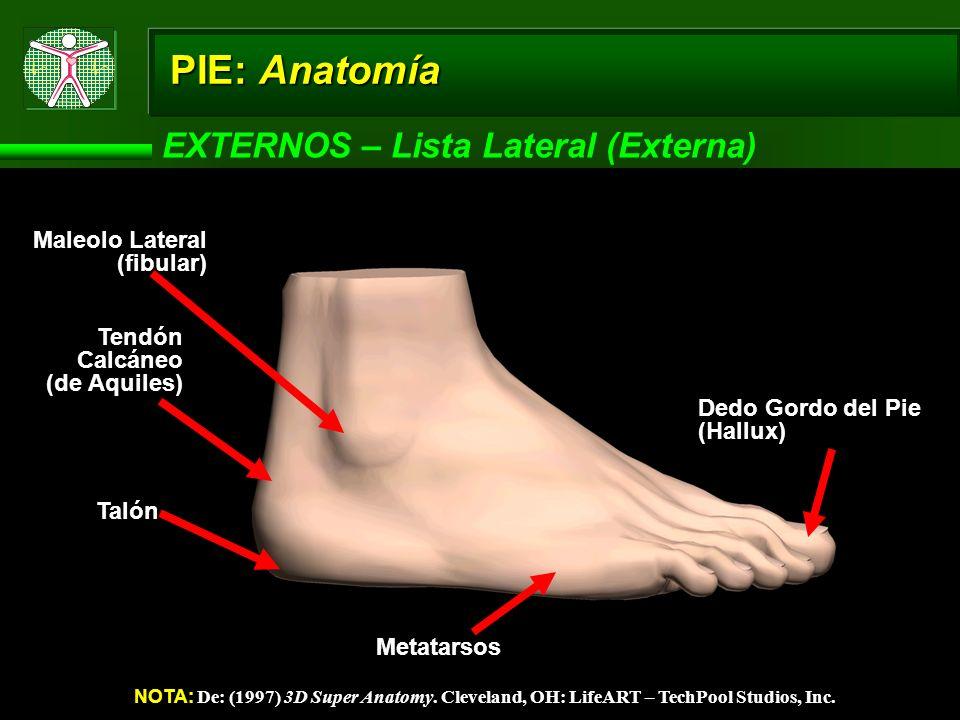 PIE: Anatomía EXTERNOS – Lista Lateral (Externa) NOTA: De: (1997) 3D Super Anatomy. Cleveland, OH: LifeART – TechPool Studios, Inc. Maleolo Lateral (f