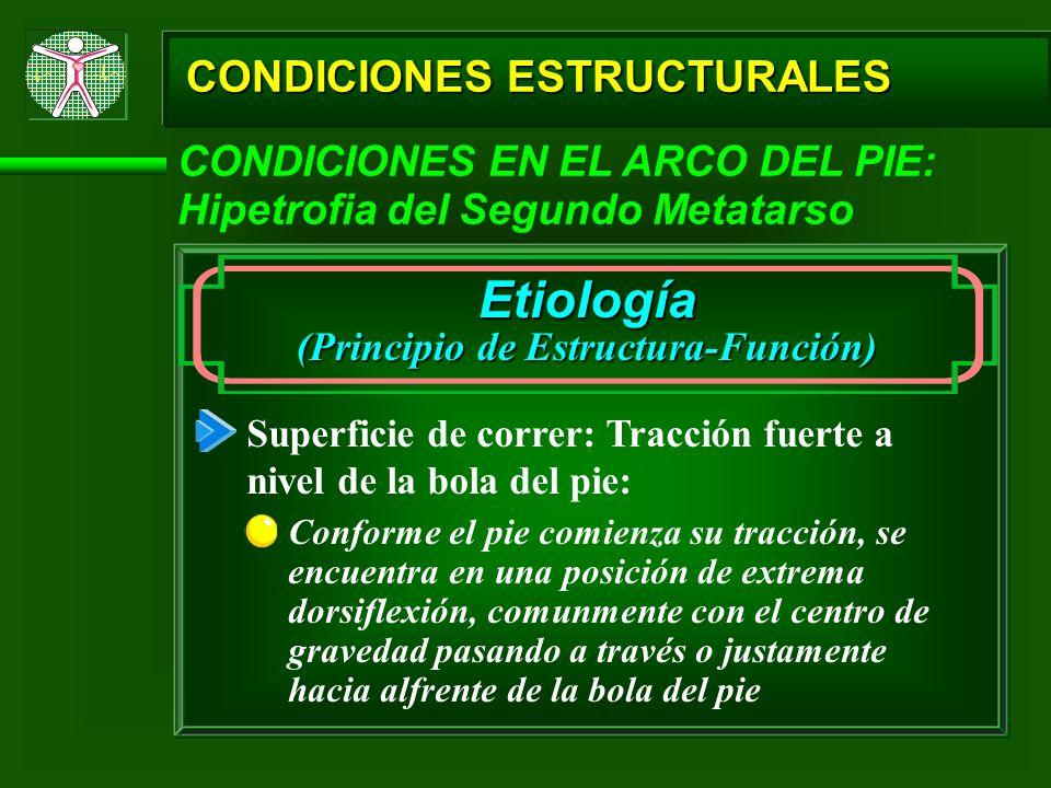 CONDICIONES ESTRUCTURALES CONDICIONES EN EL ARCO DEL PIE: Hipetrofia del Segundo Metatarso Etiología (Principio de Estructura-Función) Superficie de c
