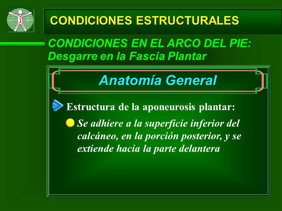 CONDICIONES ESTRUCTURALES CONDICIONES EN EL ARCO DEL PIE: Desgarre en la Fascia Plantar Estructura de la aponeurosis plantar: Se adhiere a la superfic