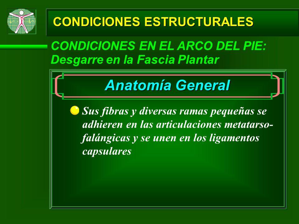 CONDICIONES ESTRUCTURALES CONDICIONES EN EL ARCO DEL PIE: Desgarre en la Fascia Plantar Sus fibras y diversas ramas pequeñas se adhieren en las articu