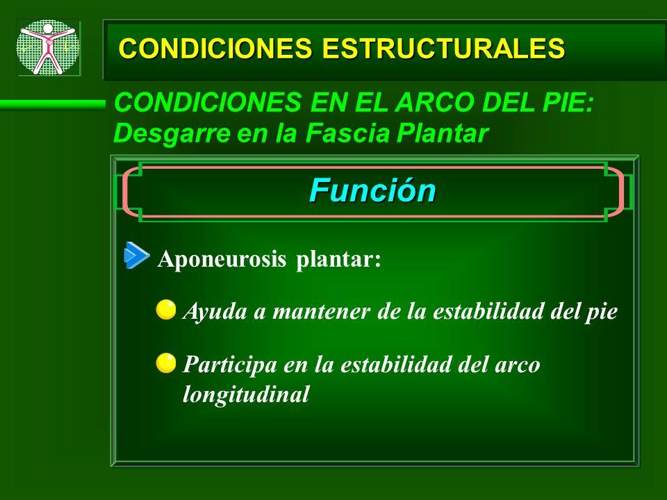 CONDICIONES ESTRUCTURALES CONDICIONES EN EL ARCO DEL PIE: Desgarre en la Fascia Plantar Función Aponeurosis plantar: Ayuda a mantener de la estabilida