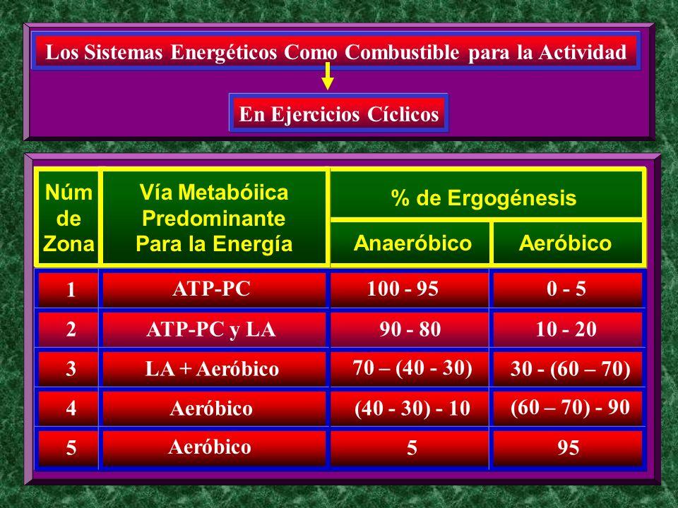 1 Núm de Zona 2 3 4 5 Los Sistemas Energéticos Como Combustible para la Actividad En Ejercicios Cíclicos 100 - 95 % de Ergogénesis AnaeróbicoAeróbico