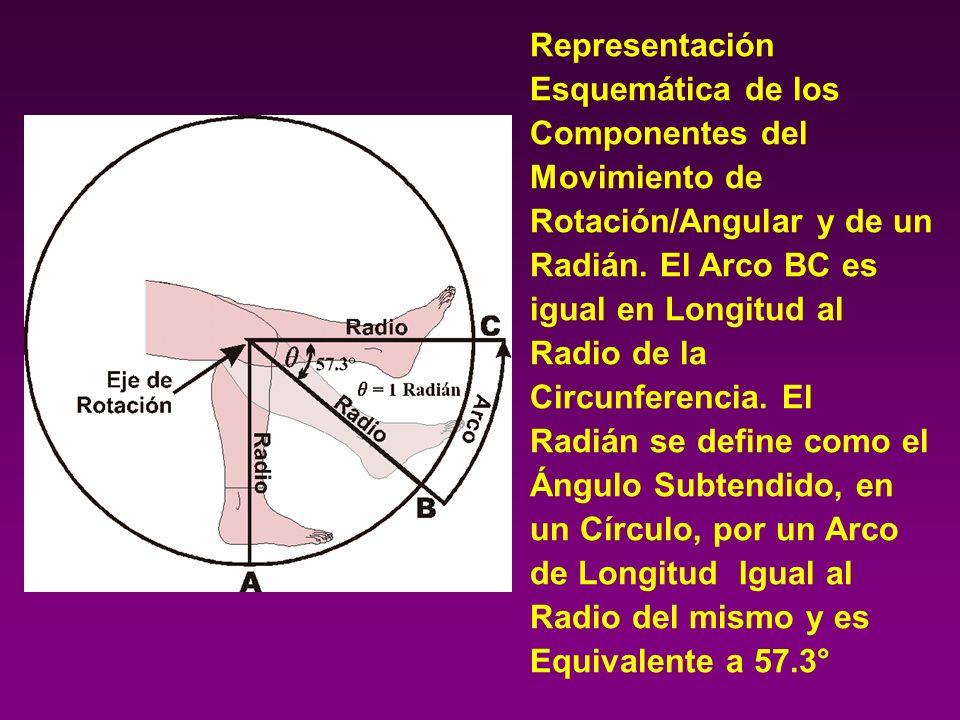 Representación Esquemática de los Componentes del Movimiento de Rotación/Angular y de un Radián. El Arco BC es igual en Longitud al Radio de la Circun