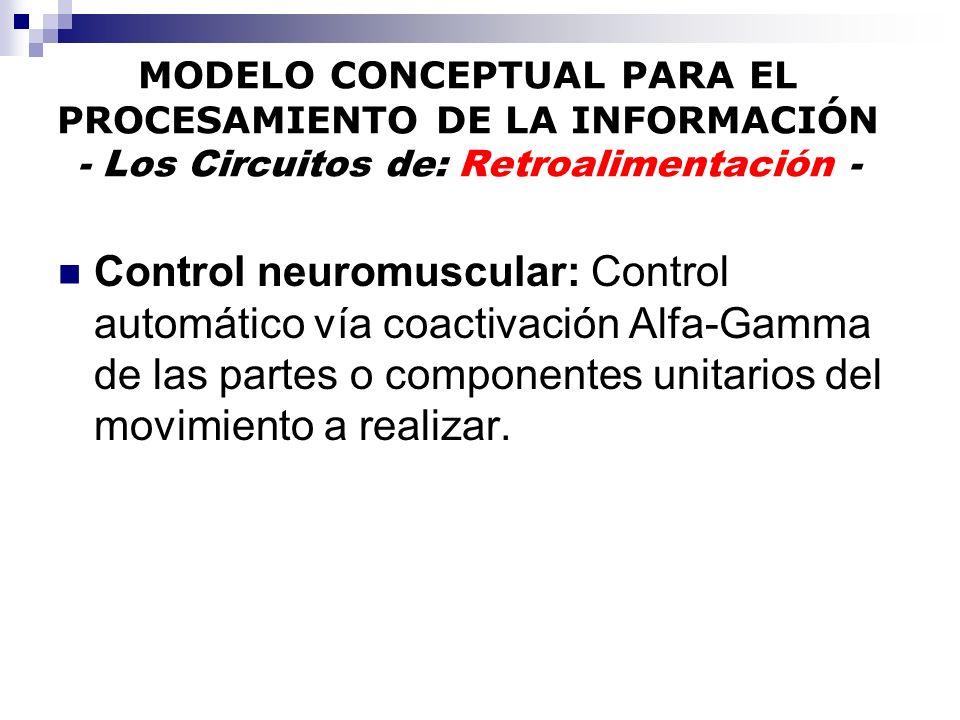 MODELO CONCEPTUAL PARA EL PROCESAMIENTO DE LA INFORMACIÓN - Los Circuitos de: Retroalimentación - Control neuromuscular: Control automático vía coacti