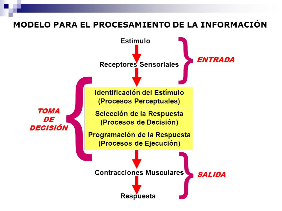 MODELO PARA EL PROCESAMIENTO DE LA INFORMACIÓN Estímulo Receptores Sensoriales Identificación del Estímulo (Procesos Perceptuales) Contracciones Muscu
