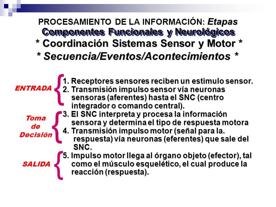 1. Receptores sensores reciben un estimulo sensor. 2. Transmisión impulso sensor vía neuronas sensoras (aferentes) hasta el SNC (centro sensoras (afer