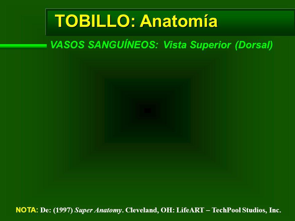 TOBILLO: Anatomía VASOS SANGUÍNEOS: Vista Superior (Dorsal) NOTA: De: (1997) Super Anatomy. Cleveland, OH: LifeART – TechPool Studios, Inc.