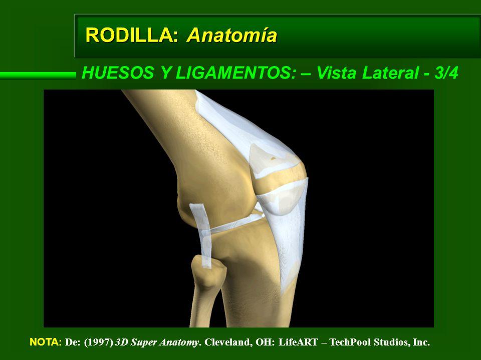 RODILLA: Anatomía HUESOS Y LIGAMENTOS: – Vista Lateral - 3/4 NOTA: De: (1997) 3D Super Anatomy. Cleveland, OH: LifeART – TechPool Studios, Inc.