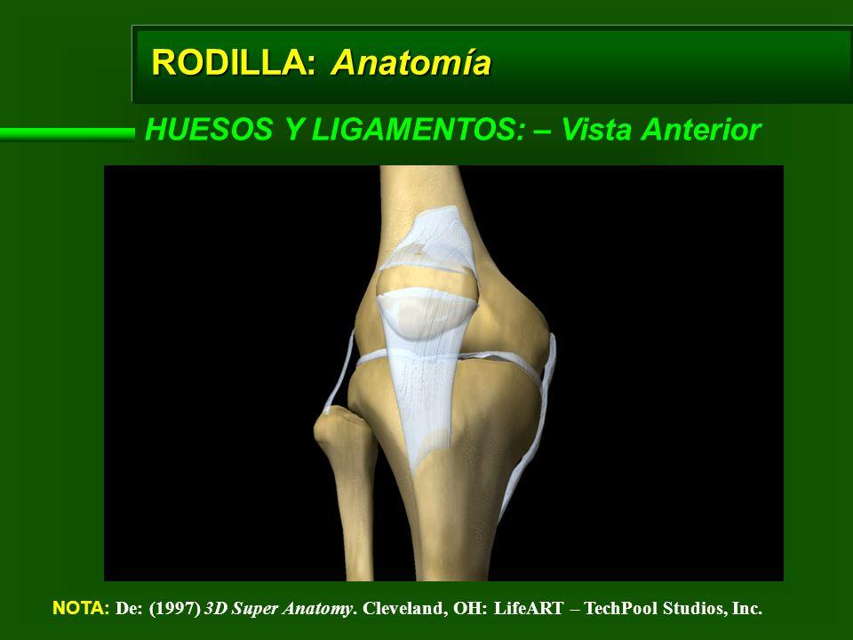 RODILLA: Anatomía EXTERNOS – Lista Lateral (Externa) NOTA: De: (1997) 3D Super Anatomy.