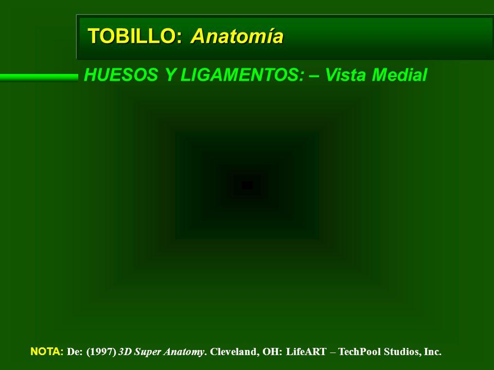 TOBILLO: Anatomía HUESOS Y LIGAMENTOS: – Vista Medial NOTA: De: (1997) 3D Super Anatomy. Cleveland, OH: LifeART – TechPool Studios, Inc.