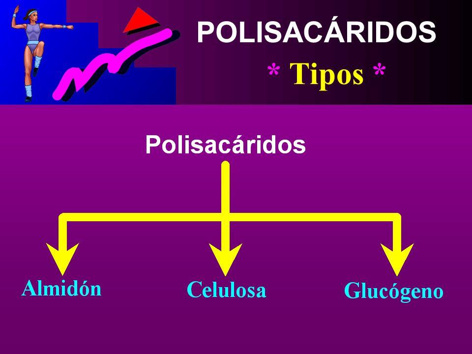 POLISACÁRIDOS * Concepto * Se Compone de Enlaces de Muchas Unidades de Glucosa (3 ó más), Formando así Cadenas Largas De Dichos Azúcares