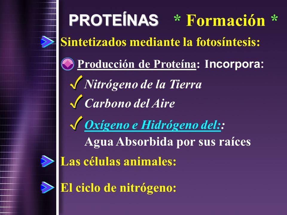 PROTEÍNAS * Formación * Sintetizados mediante la fotosíntesis: Producción de Proteína: I ncorpora: Nitrógeno de la Tierra Carbono del Aire Oxígeno e H
