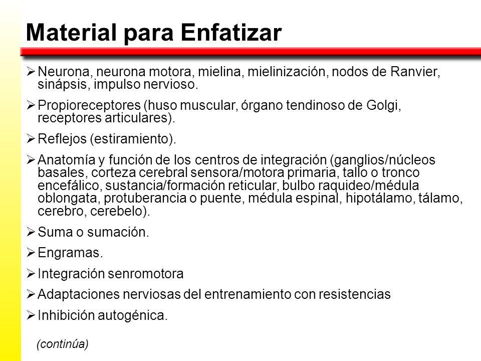 Material para Enfatizar Neurona, neurona motora, mielina, mielinización, nodos de Ranvier, sinápsis, impulso nervioso.