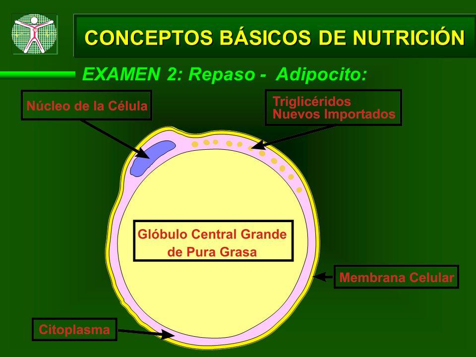 EXAMEN 2: Repaso - Adipocito: CONCEPTOS BÁSICOS DE NUTRICIÓN
