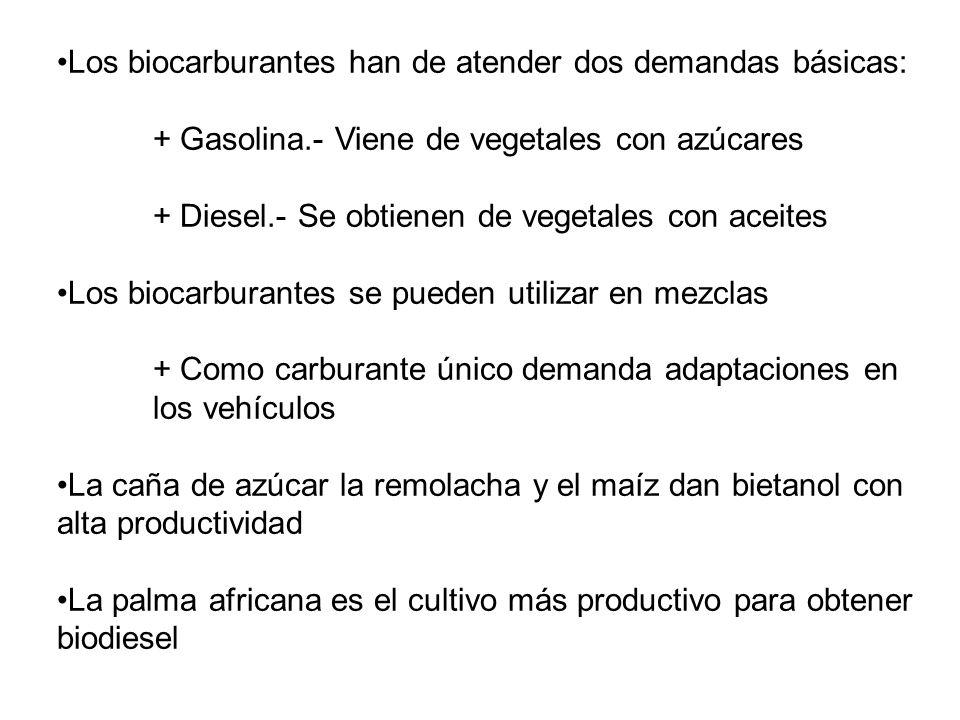 Aquellos que mueven el mercado de biocarburantes dicen que hay mucha tierra disponible para nuevos cultivos + ¿2.000 millones de hectáreas.