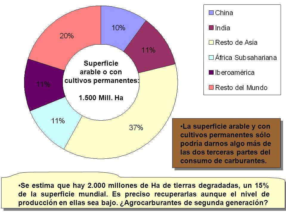 La producción mundial de caña es algo más de 1.350 millones de t.