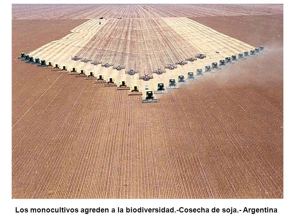 Los campos de milpa, bien sean las pequeñas propiedades o aquellos ya de mayor tamaño, no pueden llevarse alegremente al abastecimiento de la demanda de carburantes.