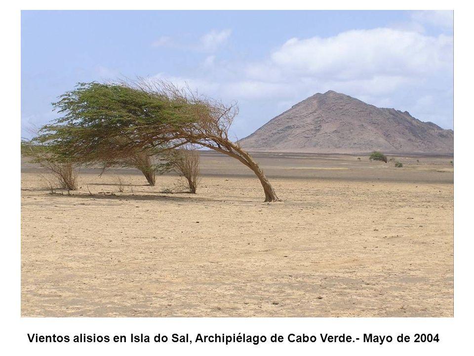 Vientos alisios en Isla do Sal, Archipiélago de Cabo Verde.- Mayo de 2004